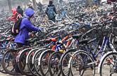 Bicycles in Tsinghua University. Beijing 05.12.11